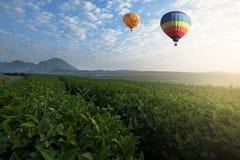 Μπαλόνι ζεστού αέρα που πετά πέρα από τη φυτεία τσαγιού το πρωί στοκ εικόνες