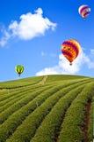 Μπαλόνι στο πράσινο αγρόκτημα τσαγιού στοκ φωτογραφία με δικαίωμα ελεύθερης χρήσης