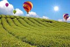 Μπαλόνι στο πράσινο αγρόκτημα τσαγιού στοκ φωτογραφία