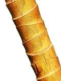 μπαμπού κίτρινο Στοκ Εικόνα
