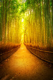Μπαμπού Κιότο Arashiyama Στοκ Φωτογραφίες