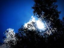 Μπαμπού μπλε ουρανού Στοκ φωτογραφία με δικαίωμα ελεύθερης χρήσης