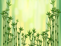 μπαμπού πράσινο Διανυσματική απεικόνιση