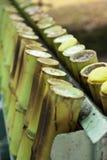 μπαμπού ρύζι ενώσεων που ψήνεται κολλώδες Στοκ εικόνα με δικαίωμα ελεύθερης χρήσης