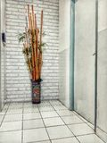 μπαμπού στο διάδρομο στοκ φωτογραφίες