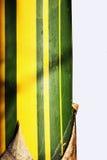 μπαμπού Στοκ Φωτογραφίες