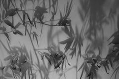 Μπαμπού Στοκ φωτογραφίες με δικαίωμα ελεύθερης χρήσης