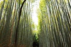Μπαμπού arashiyama μακριών περιπετειωδών μυθιστορημάτων Στοκ Εικόνες