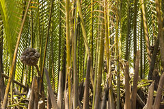 Μπαμπού Riverbank στοκ φωτογραφίες