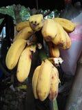 Μπανάνα κίτρινη Στοκ Φωτογραφίες