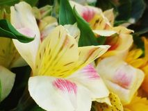 Μπανάνα λουλουδιών Στοκ εικόνες με δικαίωμα ελεύθερης χρήσης