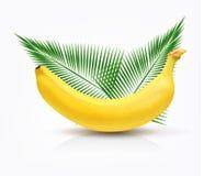 Μπανάνα που απομονώνεται διανυσματική Στοκ εικόνα με δικαίωμα ελεύθερης χρήσης