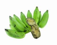 μπανάνα που καλλιεργείτ&al Στοκ Εικόνες