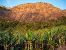 Μπανάνα που καλλιεργεί με ένα βουνό στο υπόβαθρο στοκ εικόνα