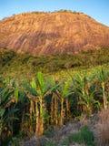 Μπανάνα που καλλιεργεί με ένα βουνό στο υπόβαθρο στοκ εικόνες
