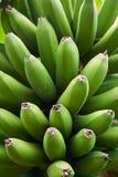 μπανάνα πράσινη Στοκ φωτογραφία με δικαίωμα ελεύθερης χρήσης