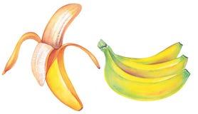 μπανάνα απεικόνιση αποθεμάτων