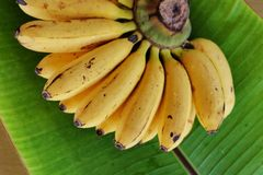 Μπανάνα Latundan Στοκ Εικόνα