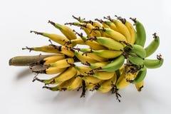 Μπανάνα Lebmuernang Στοκ Φωτογραφία