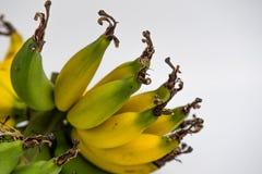 Μπανάνα Lebmuernang Στοκ Εικόνα