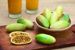 Μπανάνα Passionfruit (lat Passiflora Tripartita) Στοκ Εικόνες