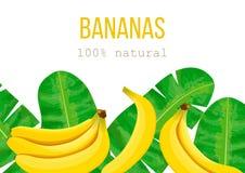 Μπανάνες και τροπικά φύλλα φοινικών, πυκνή ζούγκλα Στοκ Εικόνα
