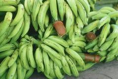 μπανάνες πράσινες Στοκ Φωτογραφίες
