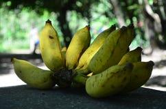 Μπανάνες στη σκιά Στοκ φωτογραφίες με δικαίωμα ελεύθερης χρήσης