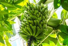 Μπανάνες του Σαν Φρανσίσκο στο πάρκο Στοκ φωτογραφία με δικαίωμα ελεύθερης χρήσης