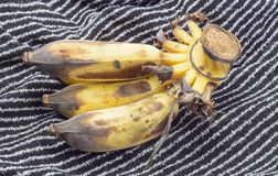μπανάνες ώριμες Στοκ εικόνες με δικαίωμα ελεύθερης χρήσης