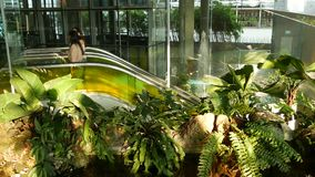 ΜΠΑΝΓΚΟΚ, ΤΑΪΛΑΝΔΗ - 18 ΔΕΚΕΜΒΡΊΟΥ 2018 το εμπορικό κέντρο πολυτέλειας Emquartier Σχέδιο της λεωφόρου, πράσινο περιβαλλοντικά απόθεμα βίντεο