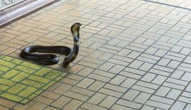 Μπανγκόκ/Ταϊλάνδη - 11 Μαΐου 2018: Το φίδι παρουσιάζει και παρουσιασμένος στους τουρίστες σε Serpentarium, ταϊλανδική κοινωνία Ερ στοκ φωτογραφία