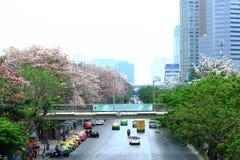 Μπανγκόκ, Ταϊλάνδη - 16 Απριλίου 2016: Ρόδινα λουλούδια σαλπίγγων που ανθίζουν στην άκρη του δρόμου Jatujak Στοκ Φωτογραφίες