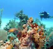 Μπαχάμες reeflife Στοκ Φωτογραφία