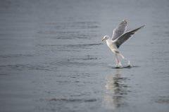 Μπαλέτο νερού Στοκ φωτογραφίες με δικαίωμα ελεύθερης χρήσης