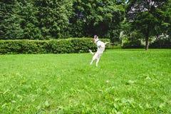 Μπαλέτο χορού σκυλιών στο μεγάλο χορτοτάπητα στο πάρκο Στοκ Εικόνες