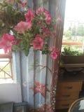 Μπαλκόνι λουλουδιών στοκ εικόνα