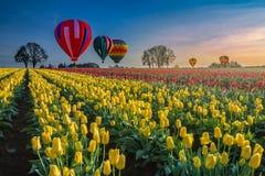 Μπαλόνια ζεστού αέρα που αιωρούνται πέρα από τις τουλίπες στοκ φωτογραφία