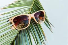 Μπεζ γυαλιά ηλίου τοπ άποψης στο φύλλο φοινικών αντικείμενο έννοιας ταξιδιού στοκ φωτογραφία