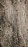 Μπεζ διακοσμητικό ασβεστοκονίαμα Στοκ φωτογραφία με δικαίωμα ελεύθερης χρήσης