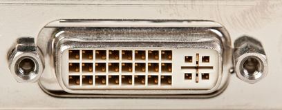 μπεζ μηνύτορας γρύλων παλ&alph Στοκ εικόνα με δικαίωμα ελεύθερης χρήσης