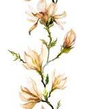 Μπεζ λουλούδια magnolia σε έναν κλαδίσκο στο άσπρο υπόβαθρο Άνευ ραφής π Στοκ φωτογραφία με δικαίωμα ελεύθερης χρήσης