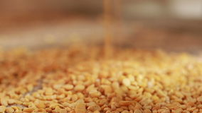 Μπιζέλια που ανατρέπουν burlap συγκομιδή φιλμ μικρού μήκους