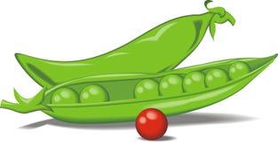 Μπιζέλι που απομονώνεται πράσινο Στοκ Φωτογραφίες