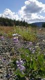 μπιμπικιαστικά λουλούδ&iot Στοκ φωτογραφία με δικαίωμα ελεύθερης χρήσης