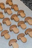 Μπισκότα σοκολάτας σε χαρτί ψησίματος στοκ εικόνα