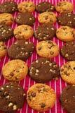 μπισκότο σοκολάτας μπισ&ka Στοκ Εικόνες
