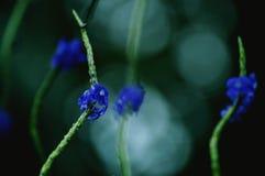 Μπλε άγρια λουλούδια σε έναν μίσχο στοκ εικόνες με δικαίωμα ελεύθερης χρήσης
