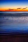 μπλε αμμόλοφοι Στοκ Εικόνες