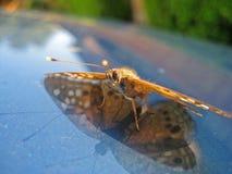 μπλε ανασκόπησης butterfly Στοκ εικόνα με δικαίωμα ελεύθερης χρήσης